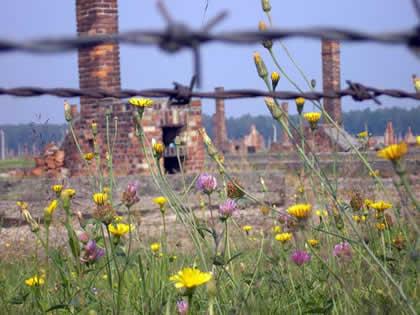 Auschwitz-Birkenau_Wikipedia-web