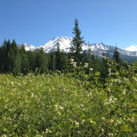 California: Want to run away? Go to Mount Shasta! Alone.