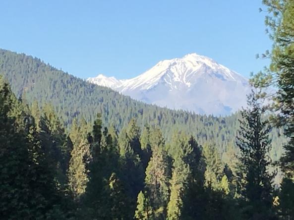 Mt. Shasta in the background.