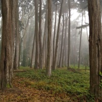 Encuentra paz en el bosque.