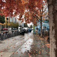 San Francisco 2020: Autumn, and the Christmas Spirit!